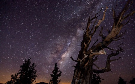 starry-sky-over-trees-17323